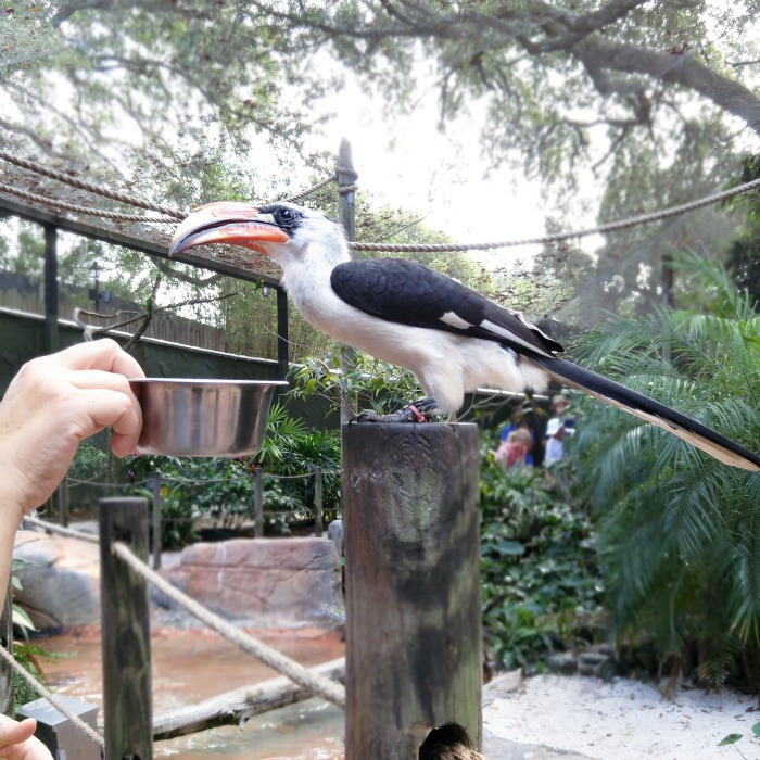 busch gardens, tampa, florida, birds, elaineloves